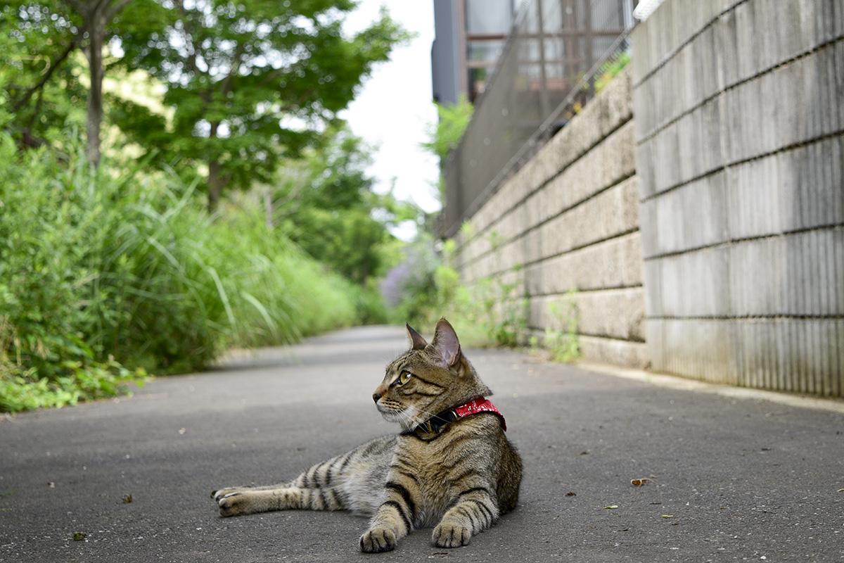 歩道でくつろぐ虎ノ介