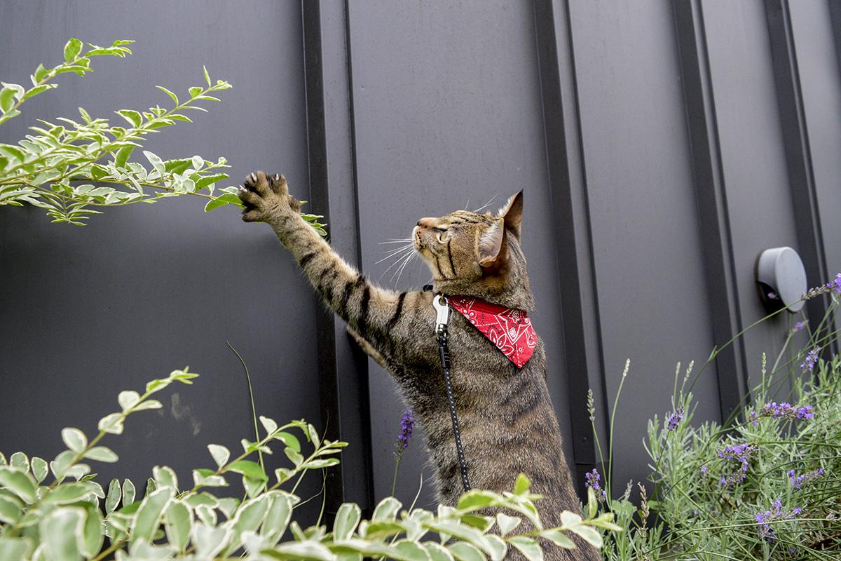 虫を捕まえようとするキジトラ猫の虎ノ介