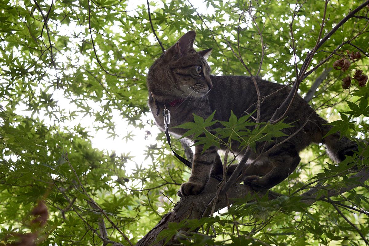 木登りを楽しむ虎ノ介