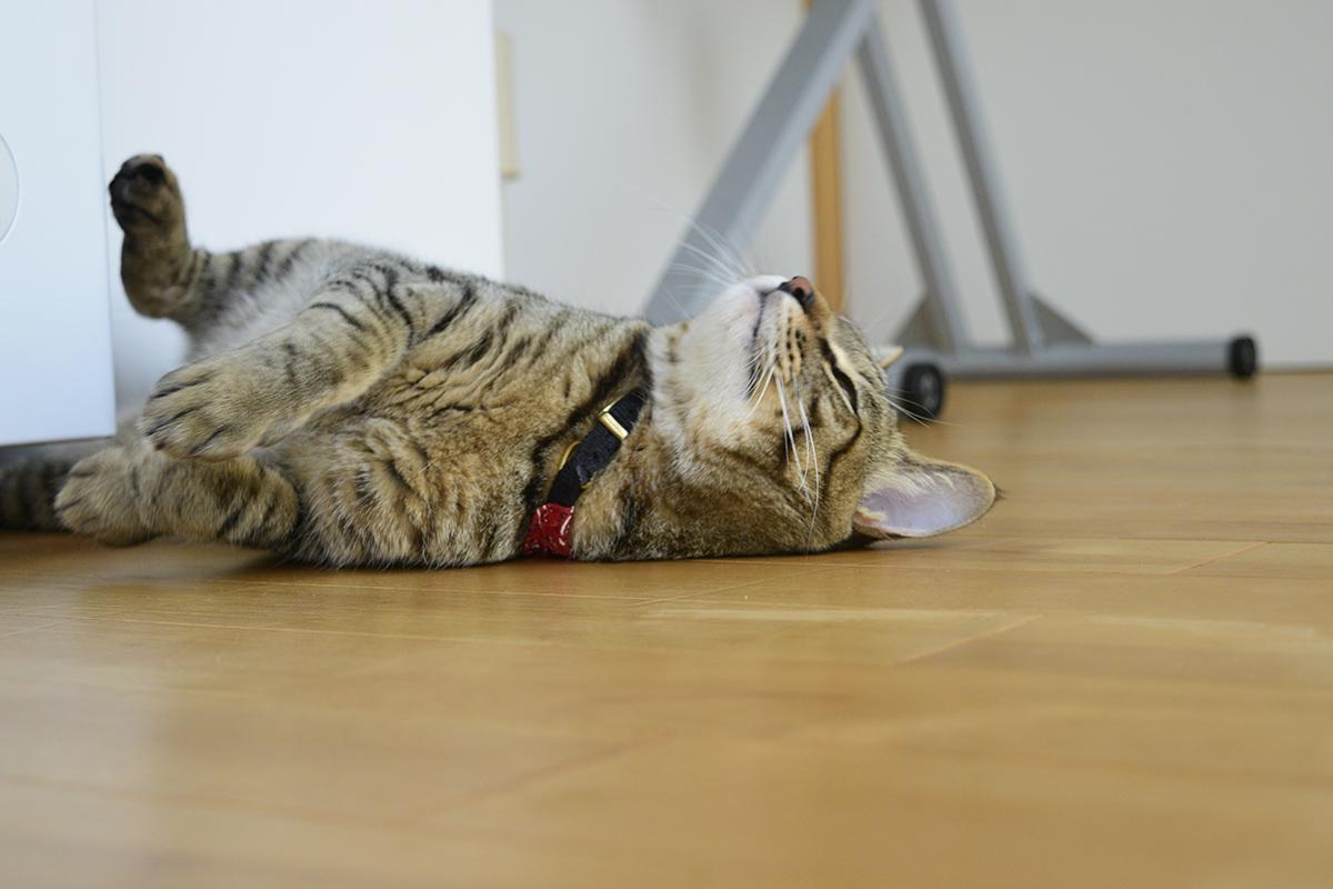 床でひっくり返る虎ノ介