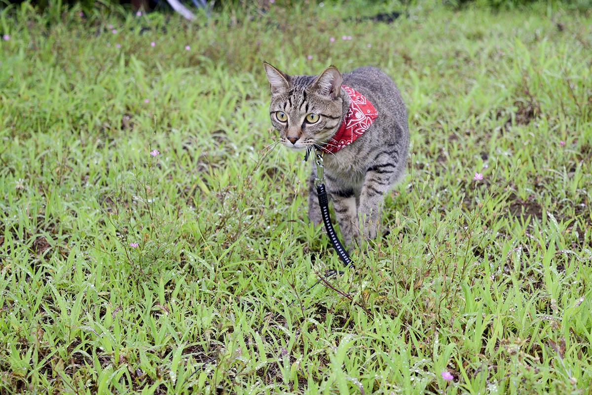 草むらでつばめをみつけたキジトラ猫の虎ノ介