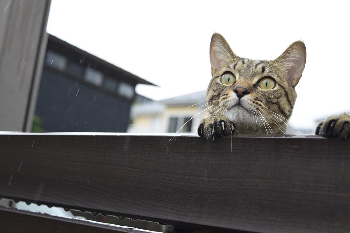 フェンスにのぼってツバメを見る虎ノ介