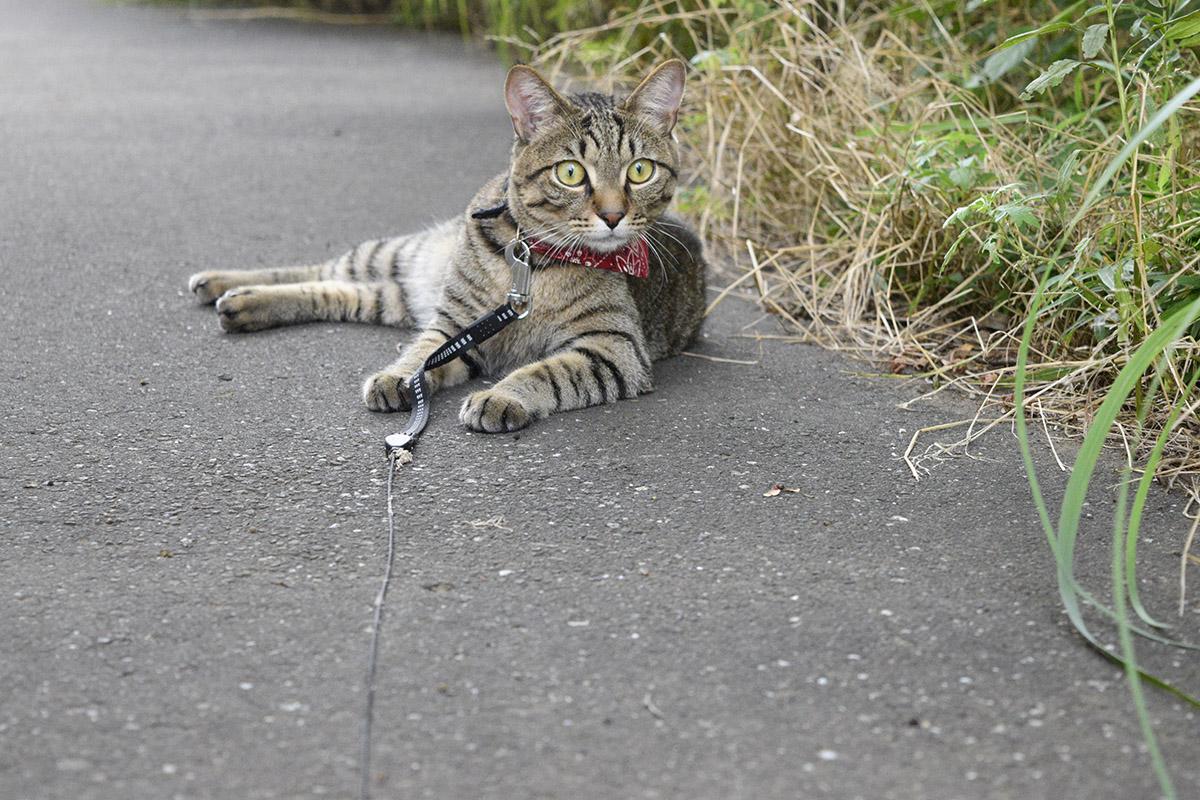 猫を見て驚く虎ノ介