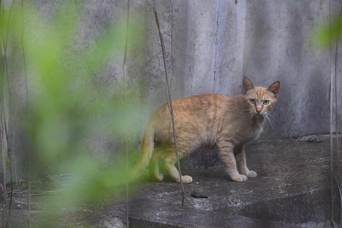 キジトラ猫の虎ノ介をみつめる茶トラ