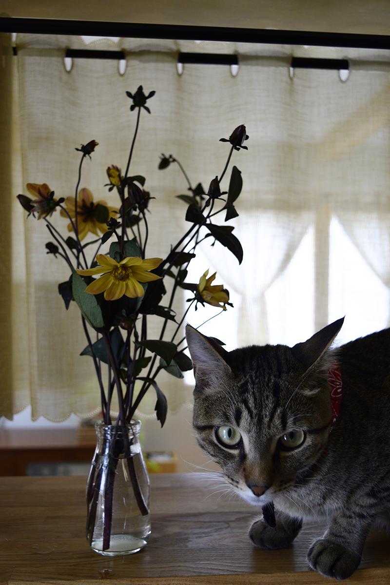 花の横に並ぶキジトラ猫の虎ノ介
