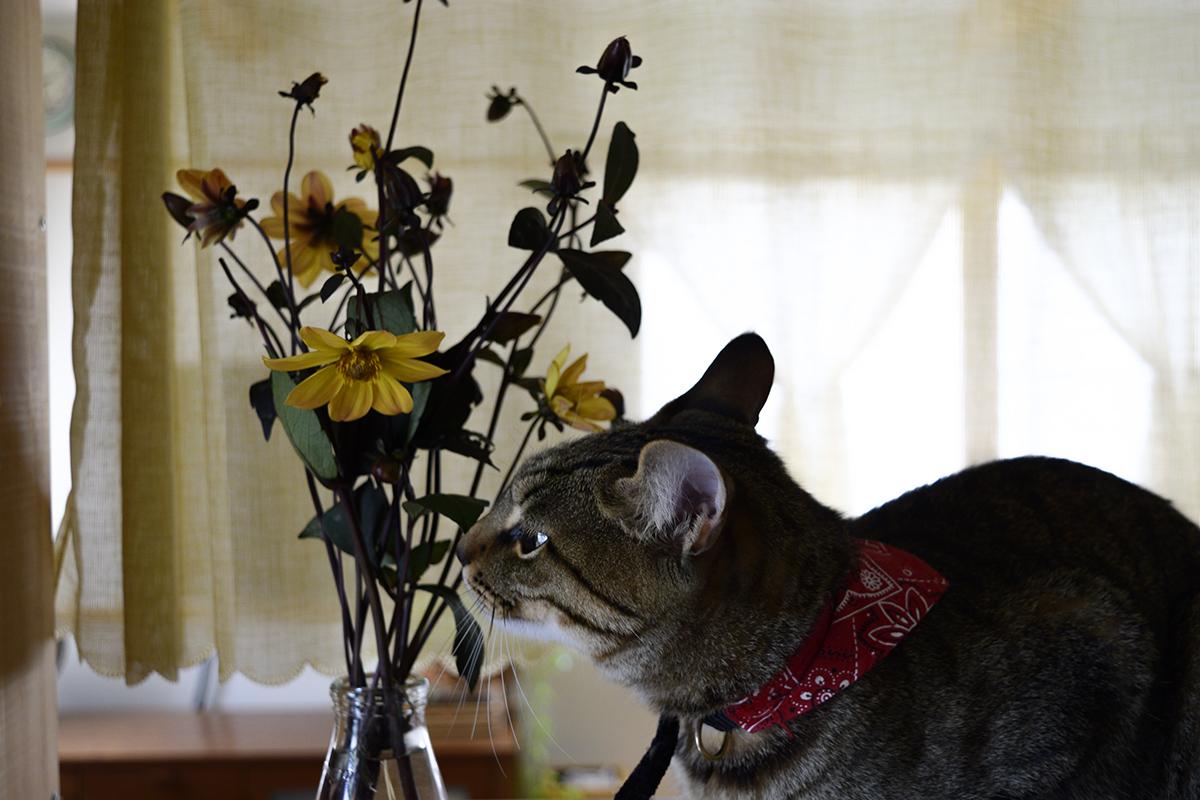 お花のにおいをかぐ虎ノ介