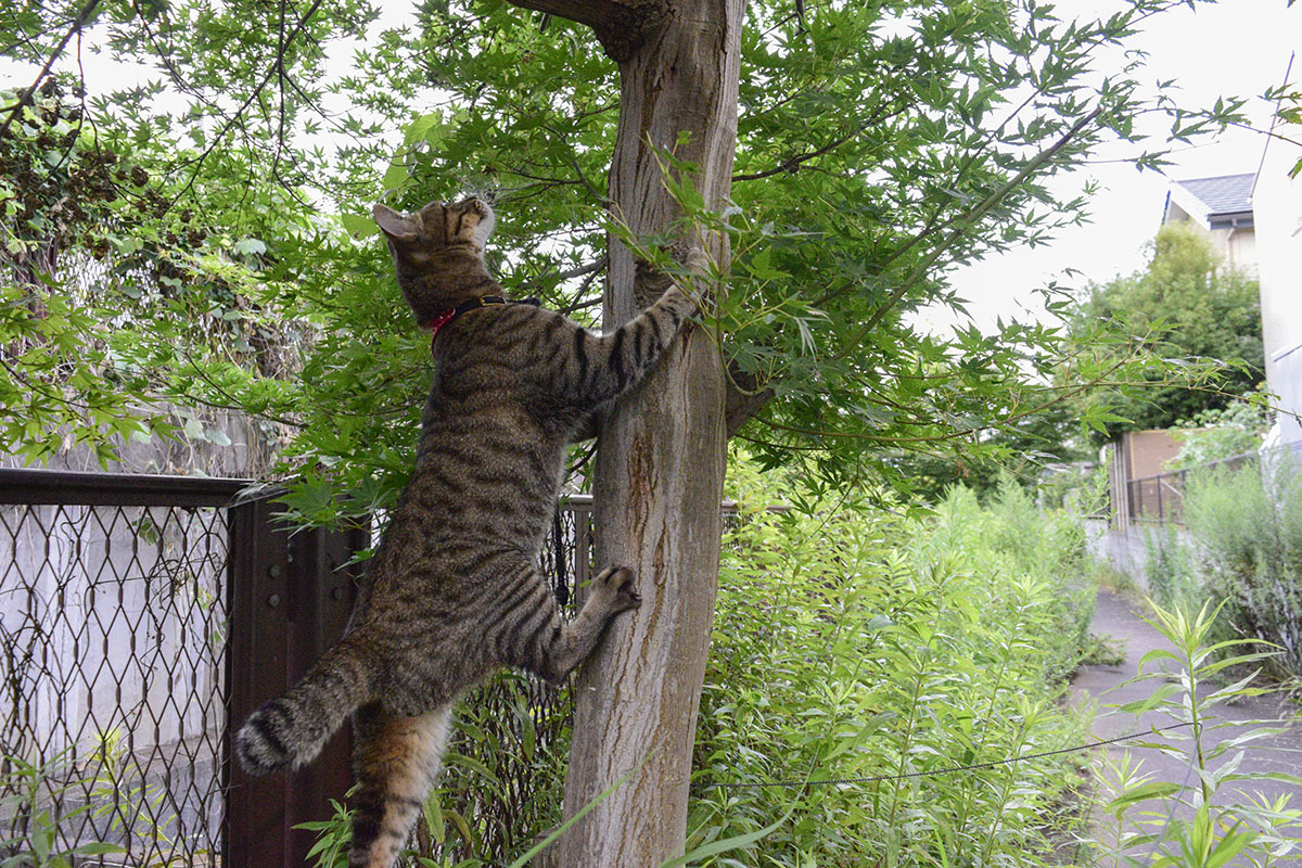 木によじ登ろうとする虎ノ介