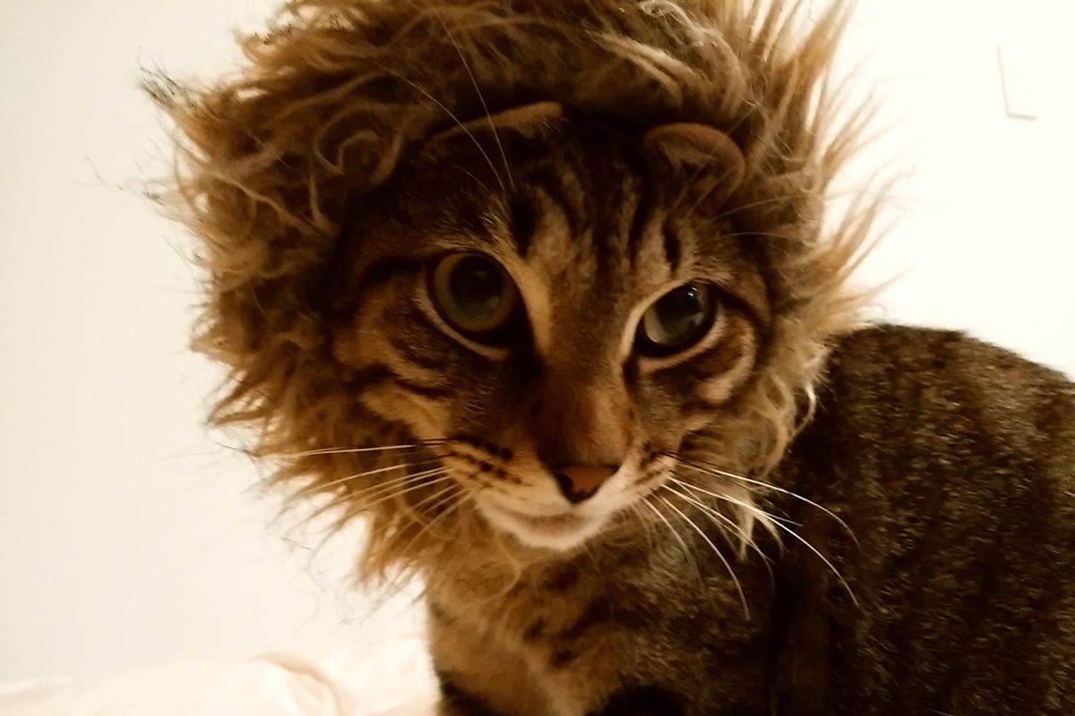 ライオンの被り物をかぶる虎ノ介