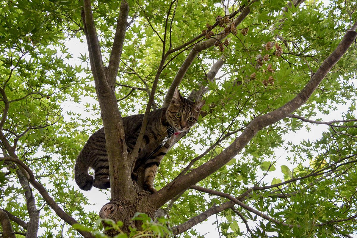 木から降りられなくなった虎ノ介