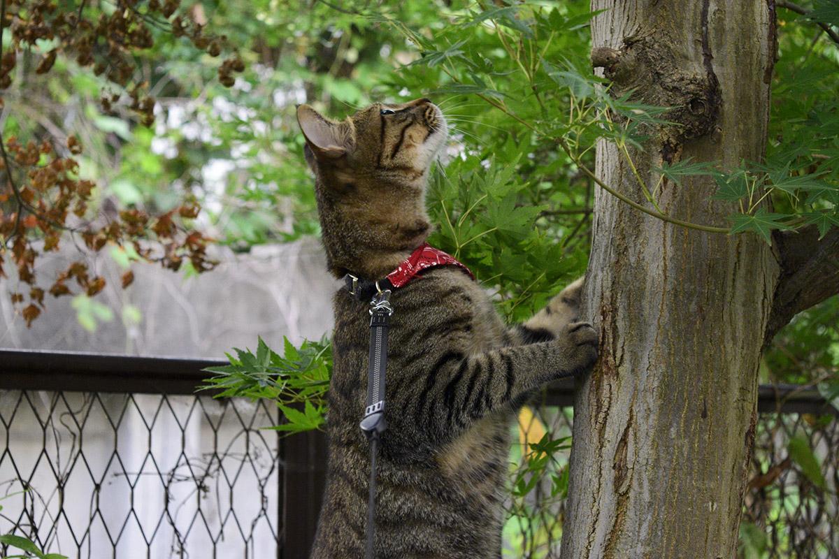 蝉をおいかけるキジトラ猫の虎ノ介