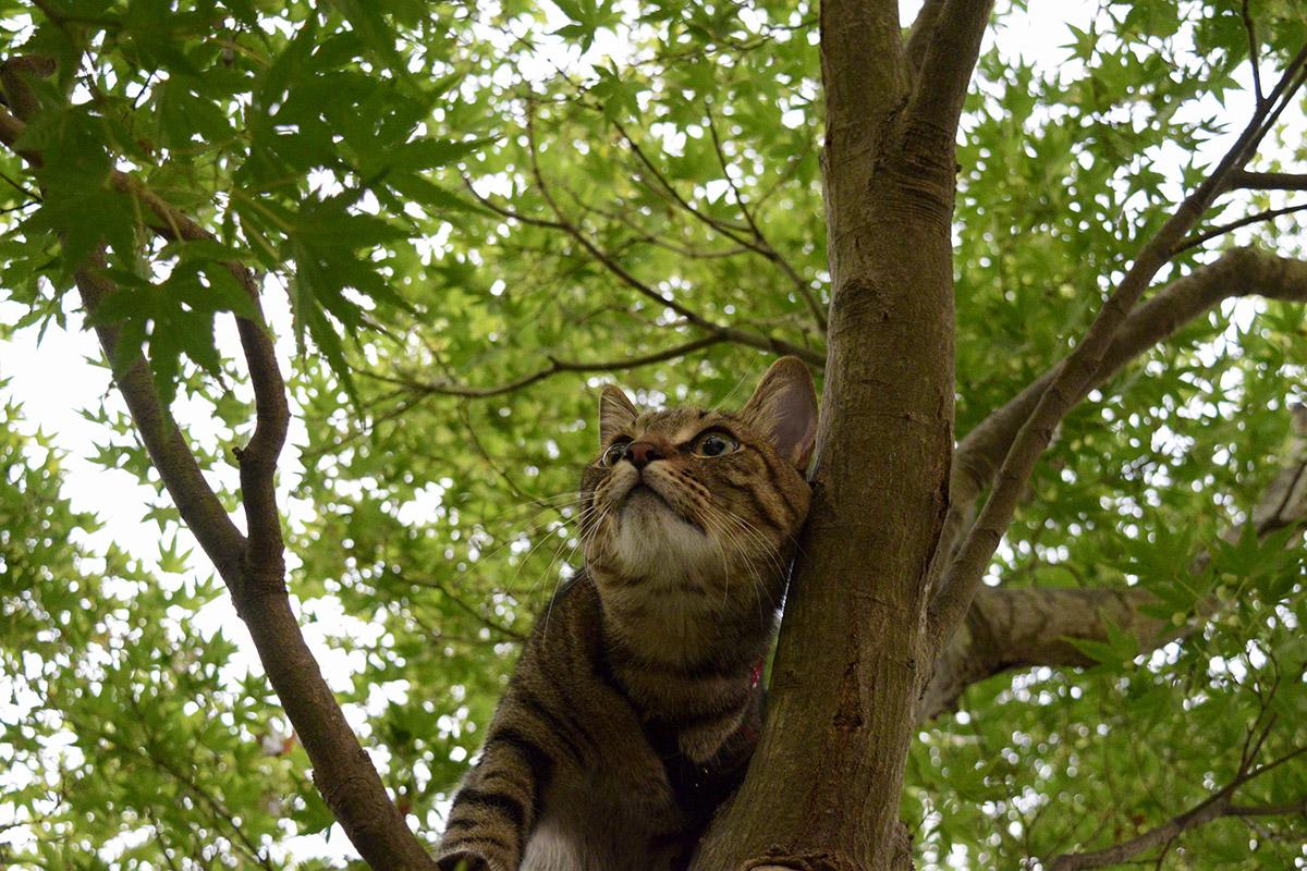 木の上でリードが絡まって動けなくなった虎ノ介