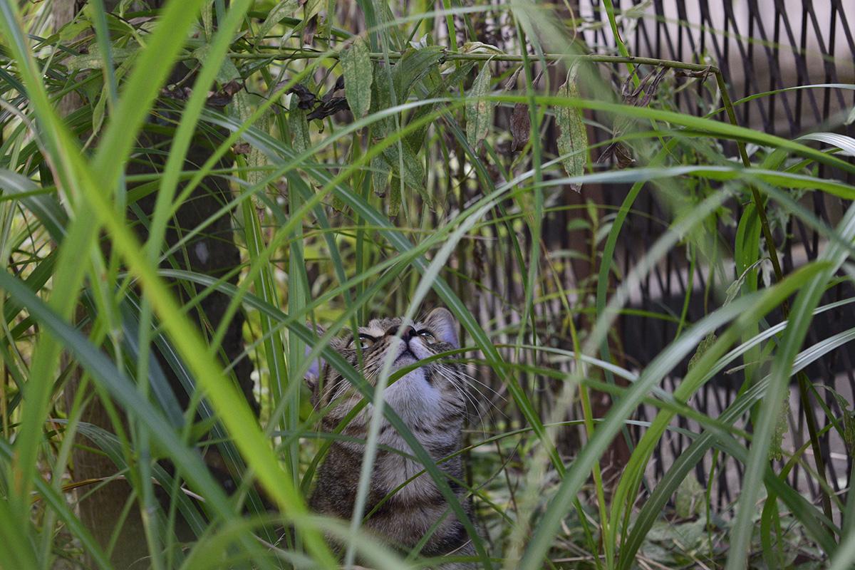 草の中からセミを見つめる虎ノ介