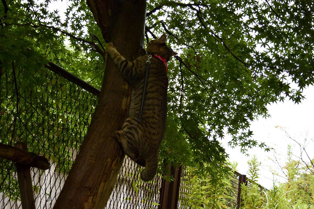 木によじ登る虎ノ介