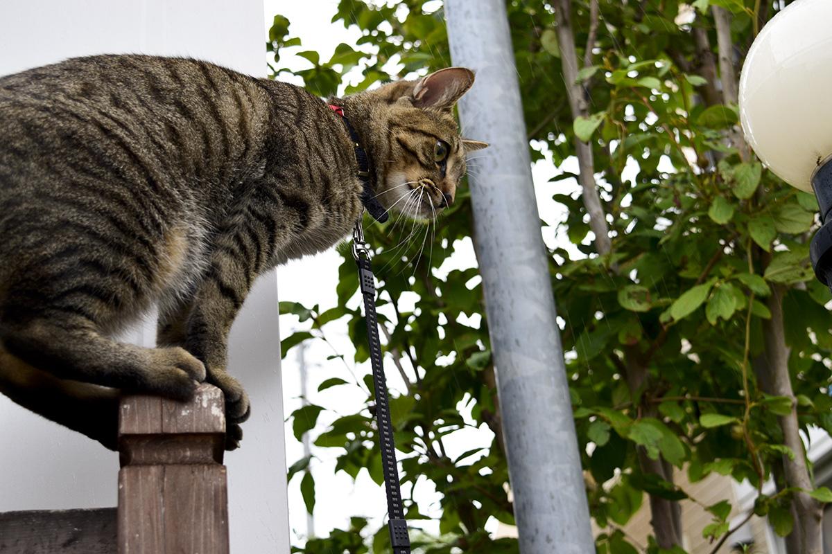 蝉を捕まえようとフェンスの上にのったら犬がいて困る虎ノ介