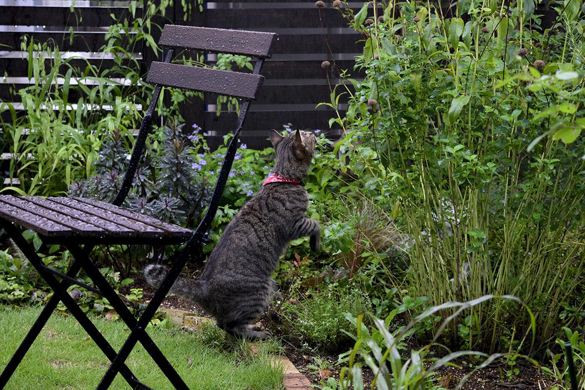 外で虫を捕まえるキジトラ猫の虎ノ介
