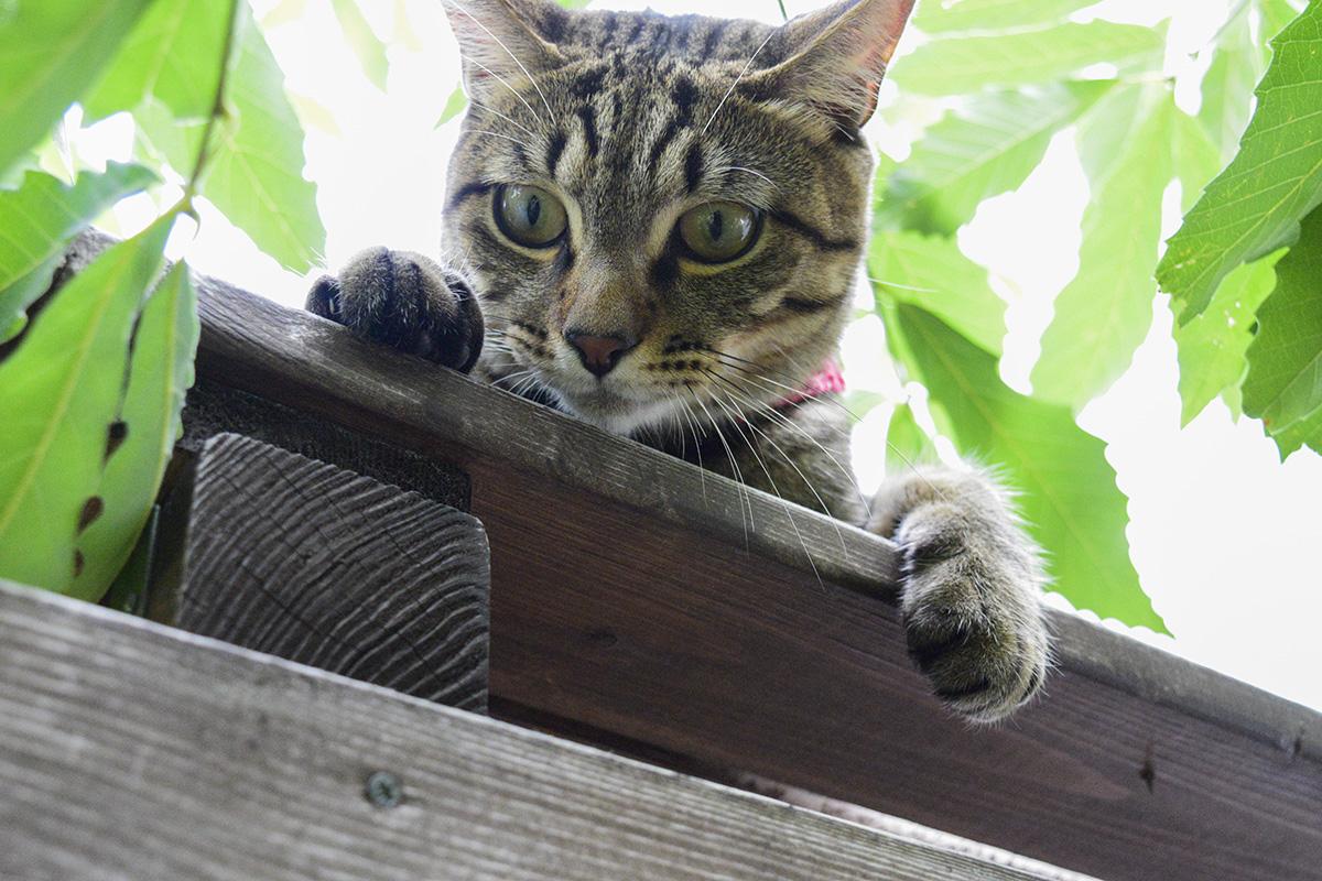 なんとか小屋の上に戻った虎ノ介
