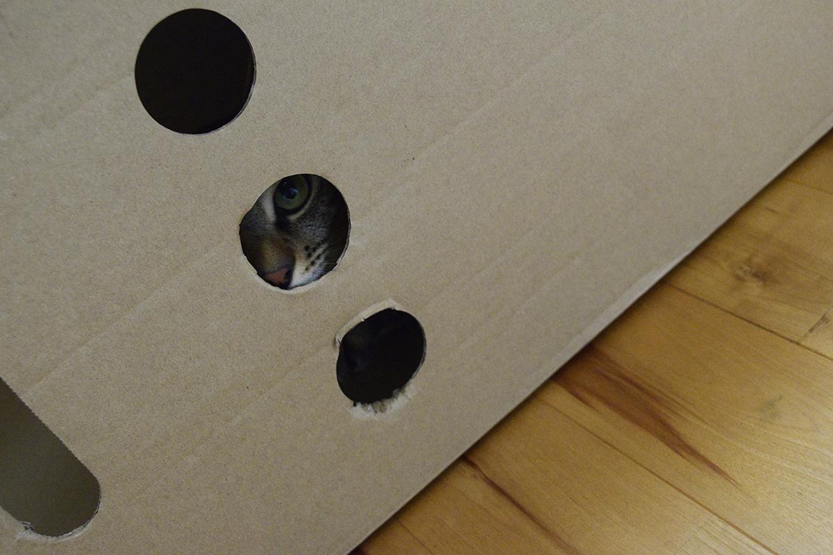 箱から覗くキジトラ猫の虎ノ介
