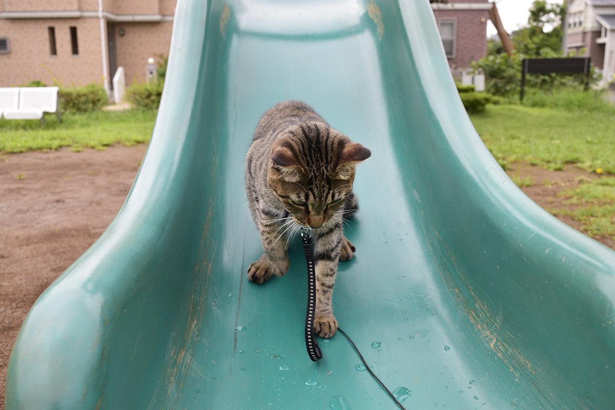 滑り台で遊ぶ虎ノ介