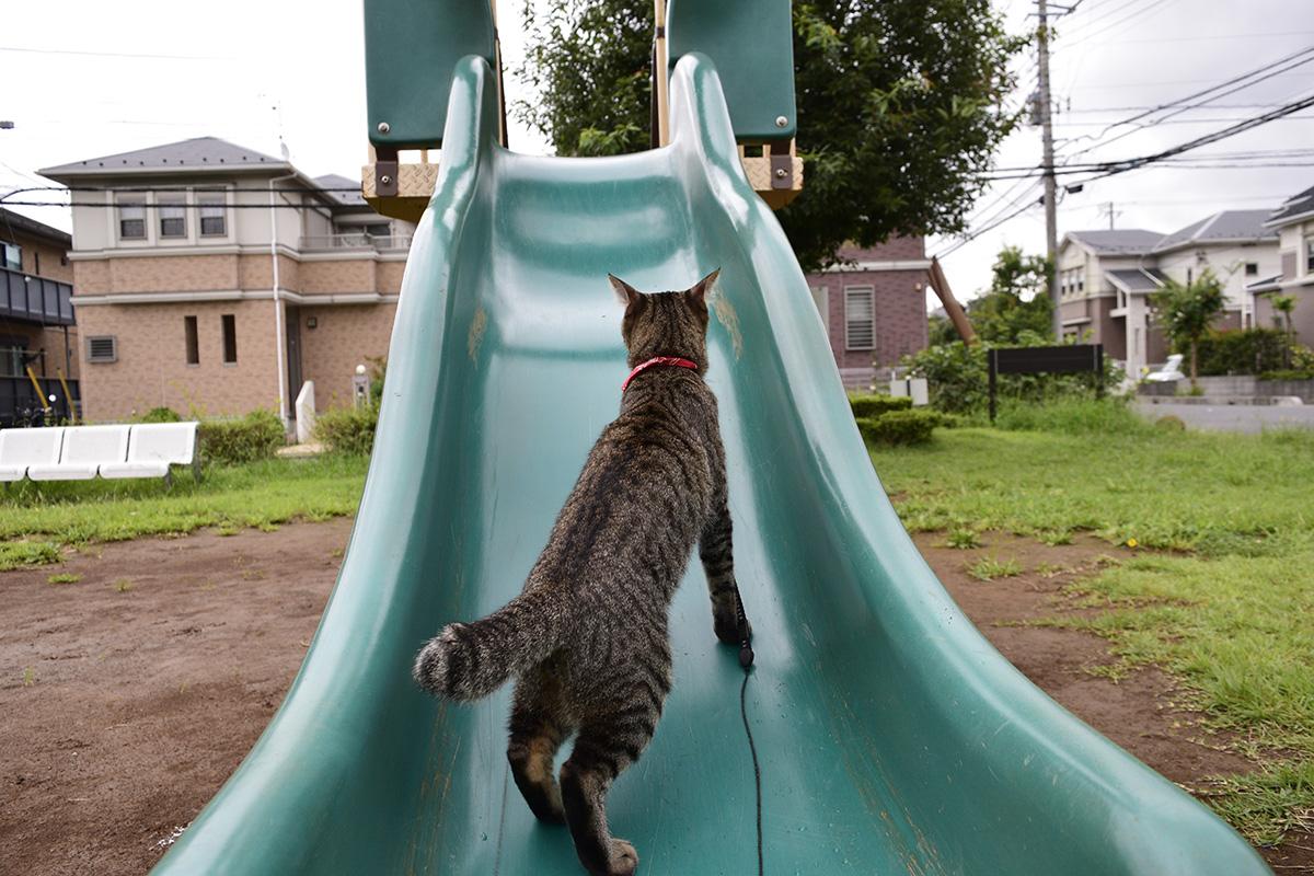 滑り台を逆から登ろうとするキジトラ猫の虎ノ介