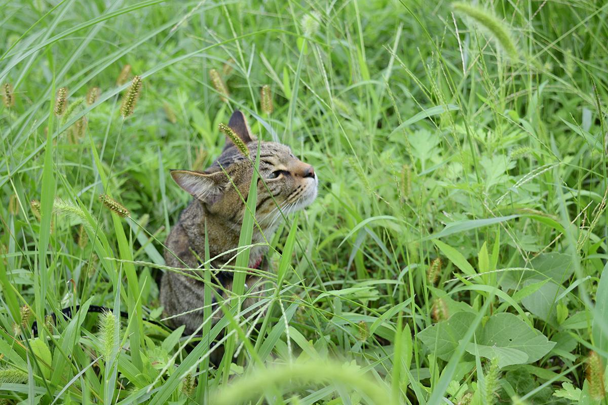 草むらでスンスンする虎ノ介