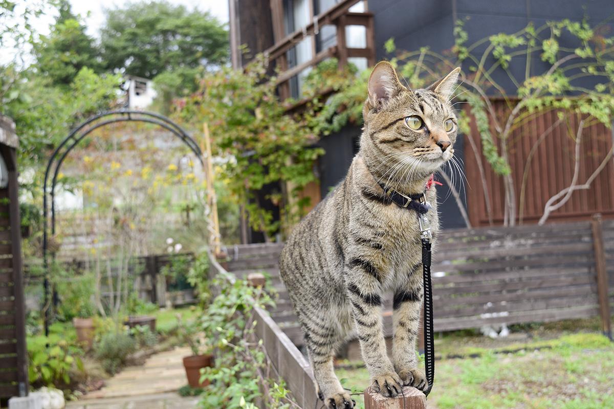 フェンスの上でトンボを待つ虎ノ介