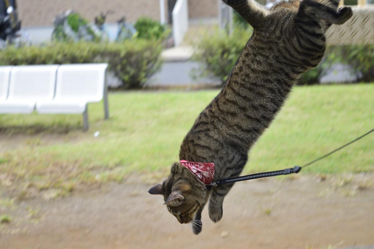 滑り台から飛び降りるキジトラ猫の虎ノ介