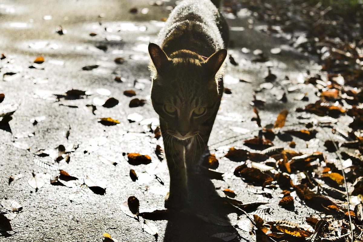 雨上がりに散歩する虎ノ介