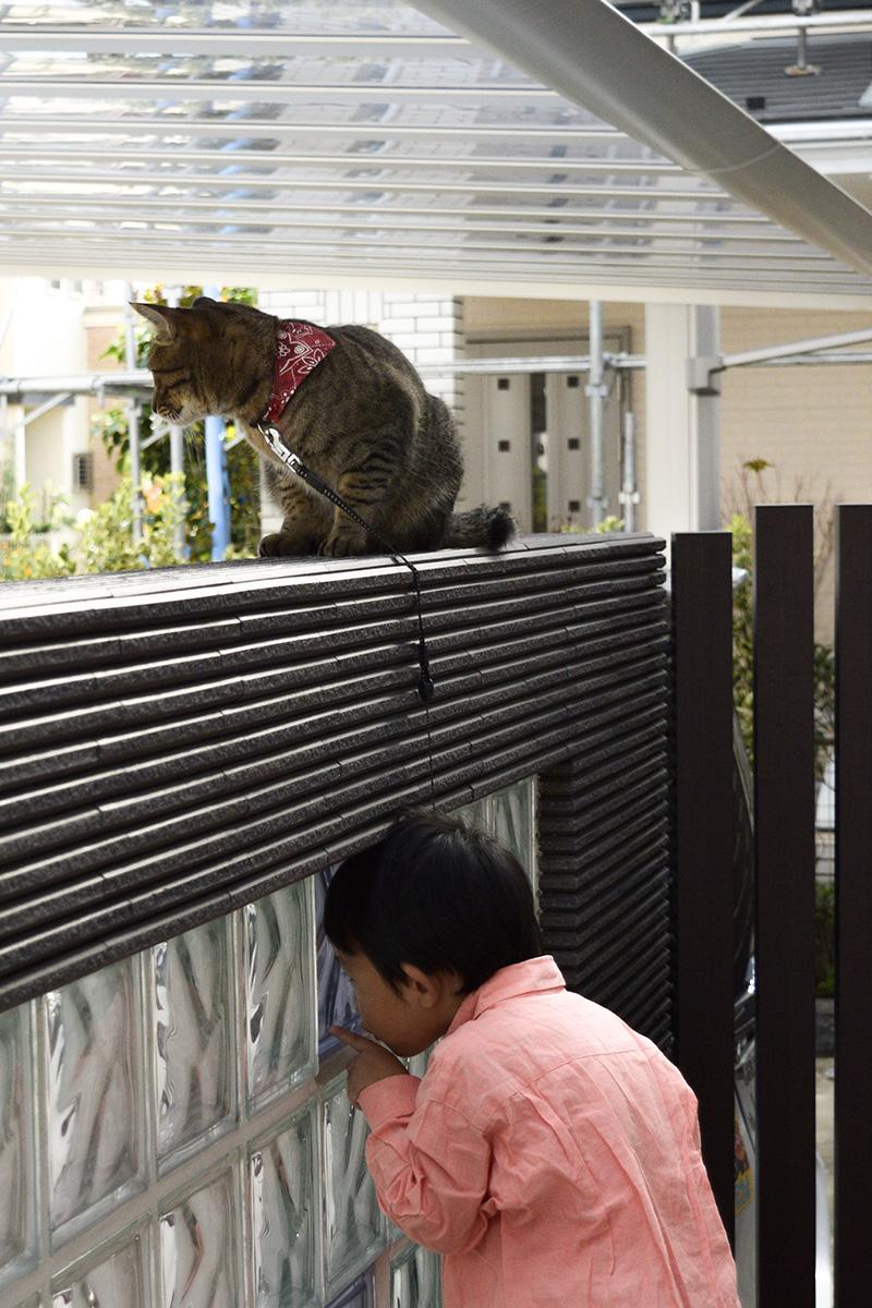 隣の子と一緒に内側から外をみるキジトラ猫の虎ノ介