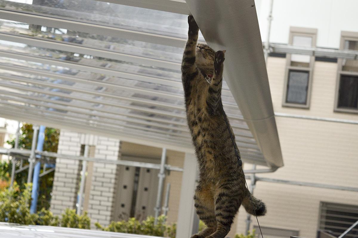 駐車場の屋根に上ろうとする虎ノ介