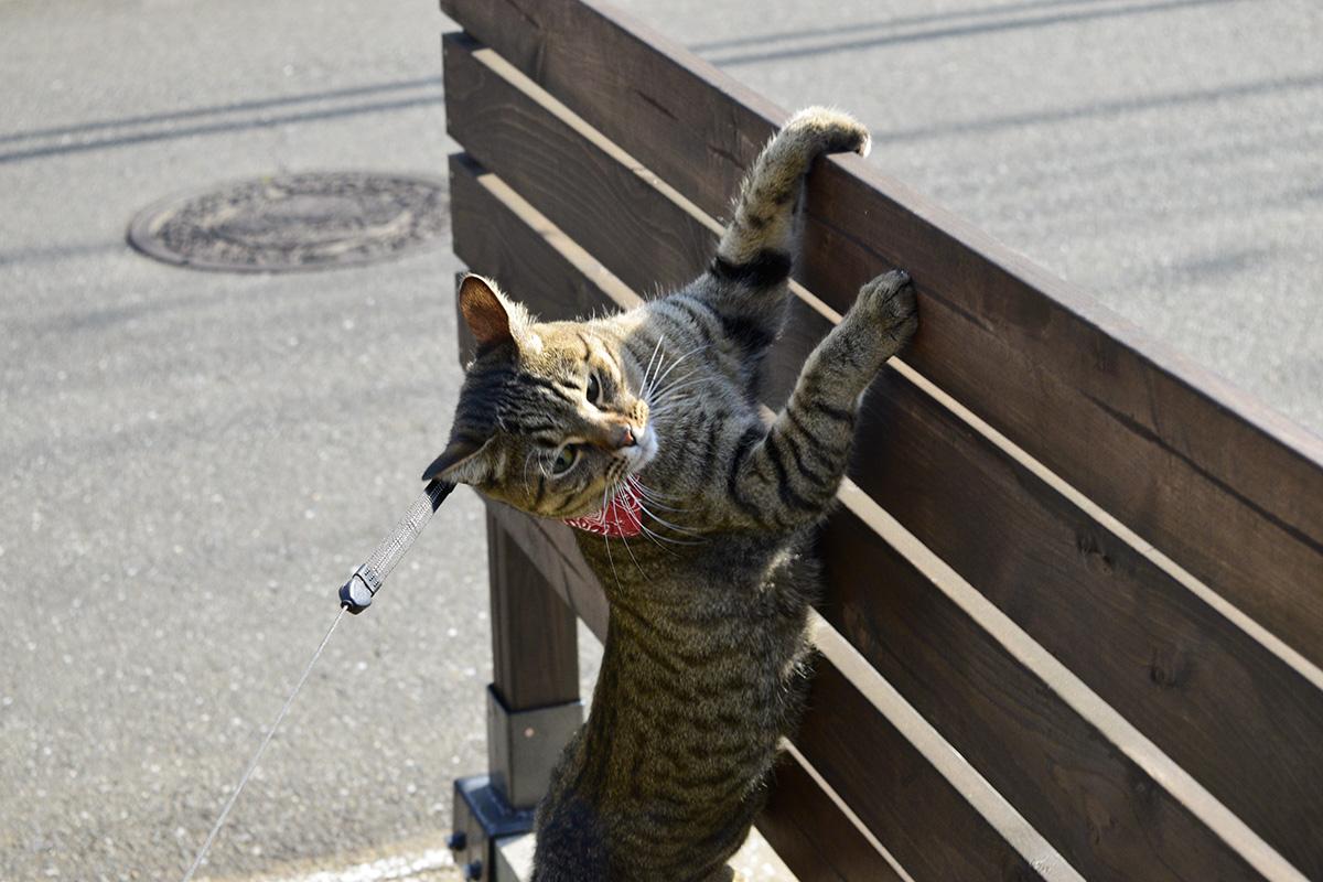 トンボを捕まえ損ねたキジトラ猫の虎ノ介