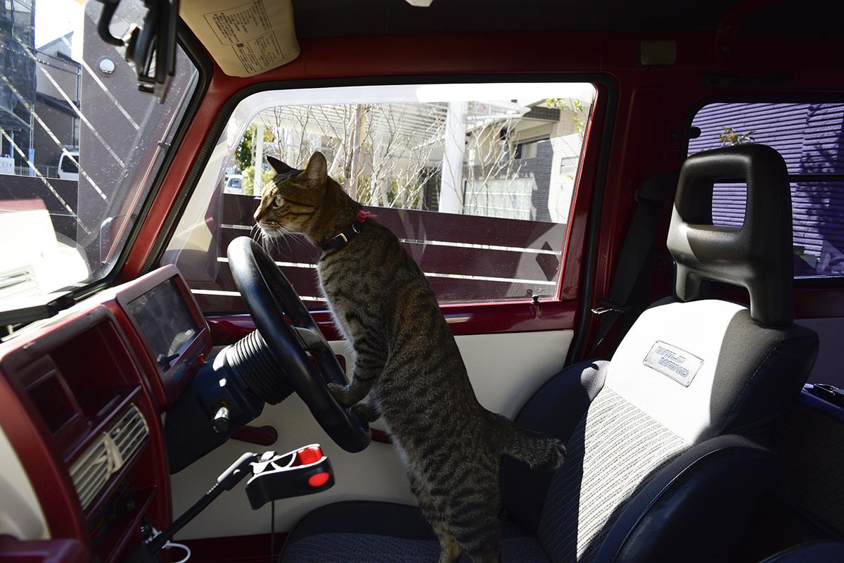 車に乗る虎ノ介