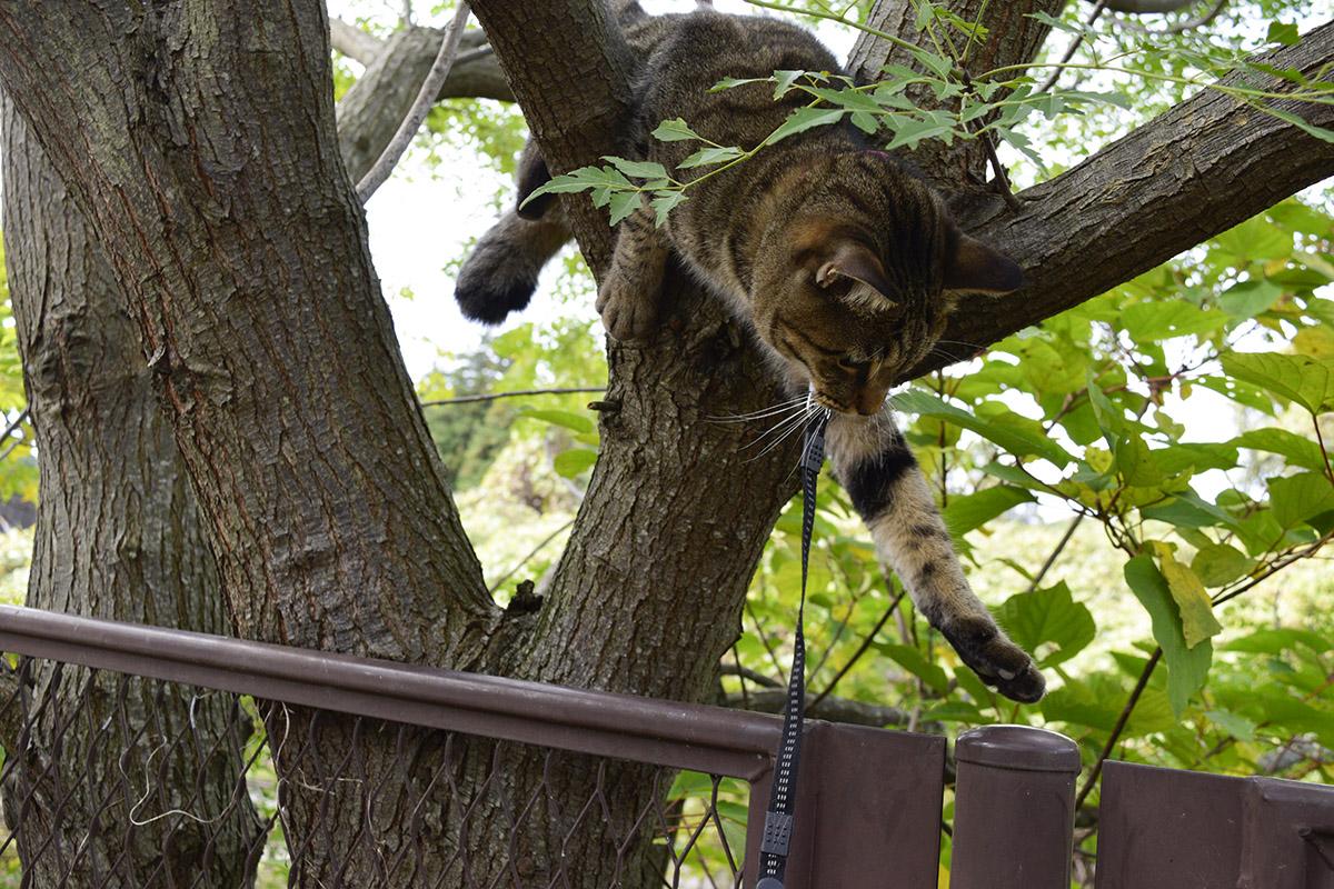 木から上手に降りられない虎ノ介