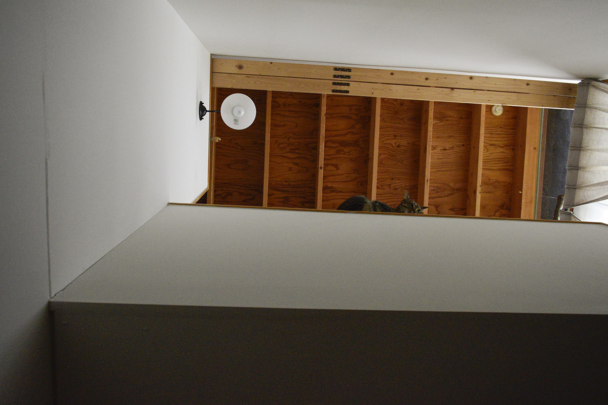 階段の手すりに座るキジトラ猫の虎ノ介