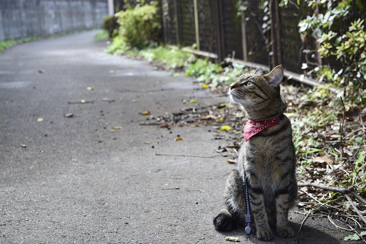 お外の空気を満喫するキジトラ猫の虎ノ介