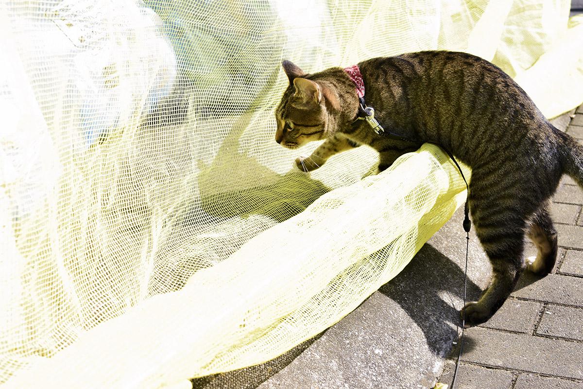 ゴミ捨て場に興味津々のキジトラ猫の虎ノ介