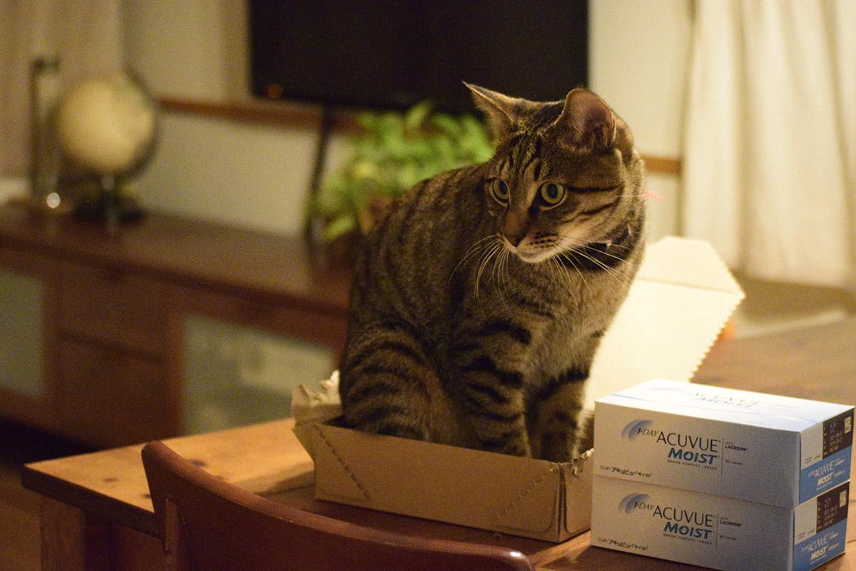 箱に入る虎ノ介
