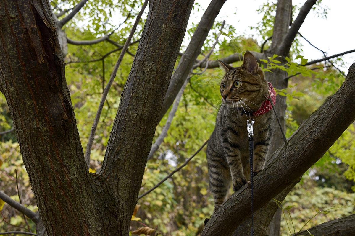 木の上にのぼるキジトラ猫の虎ノ介