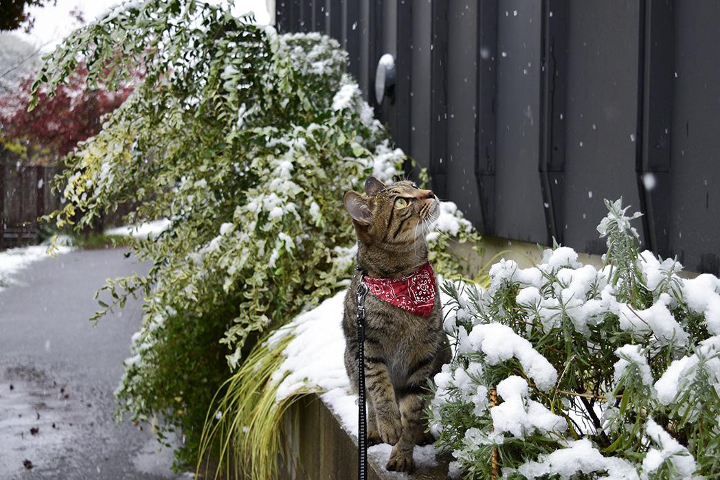 初めての雪を見つめる虎ノ介