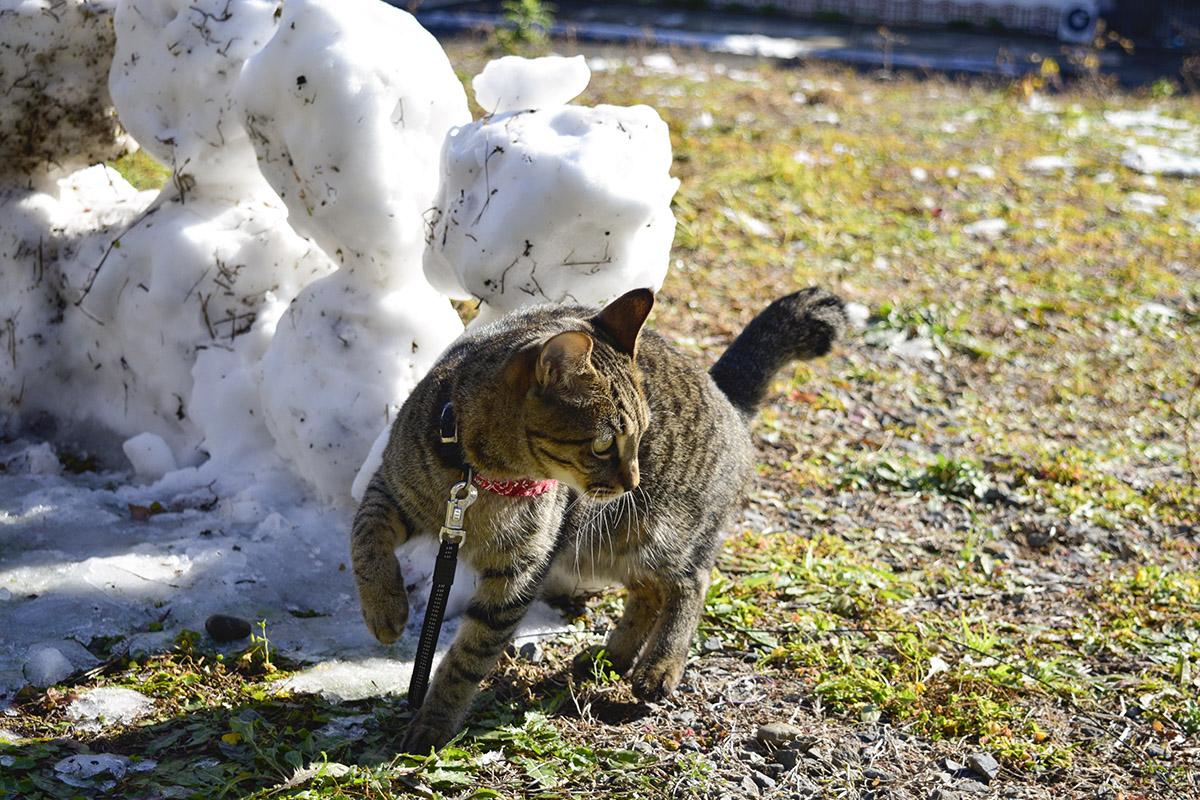 雪ダルマと虎ノ介