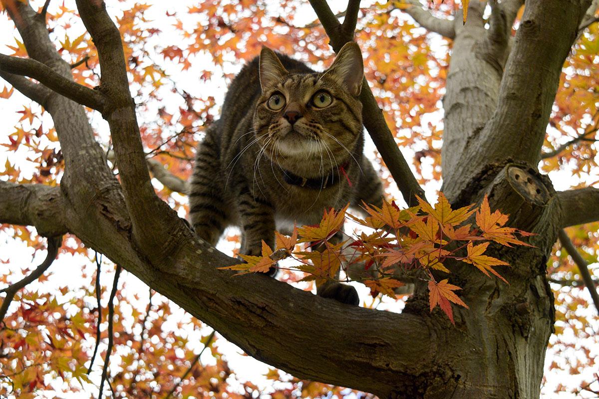 高いところを目指し木に登る虎ノ介