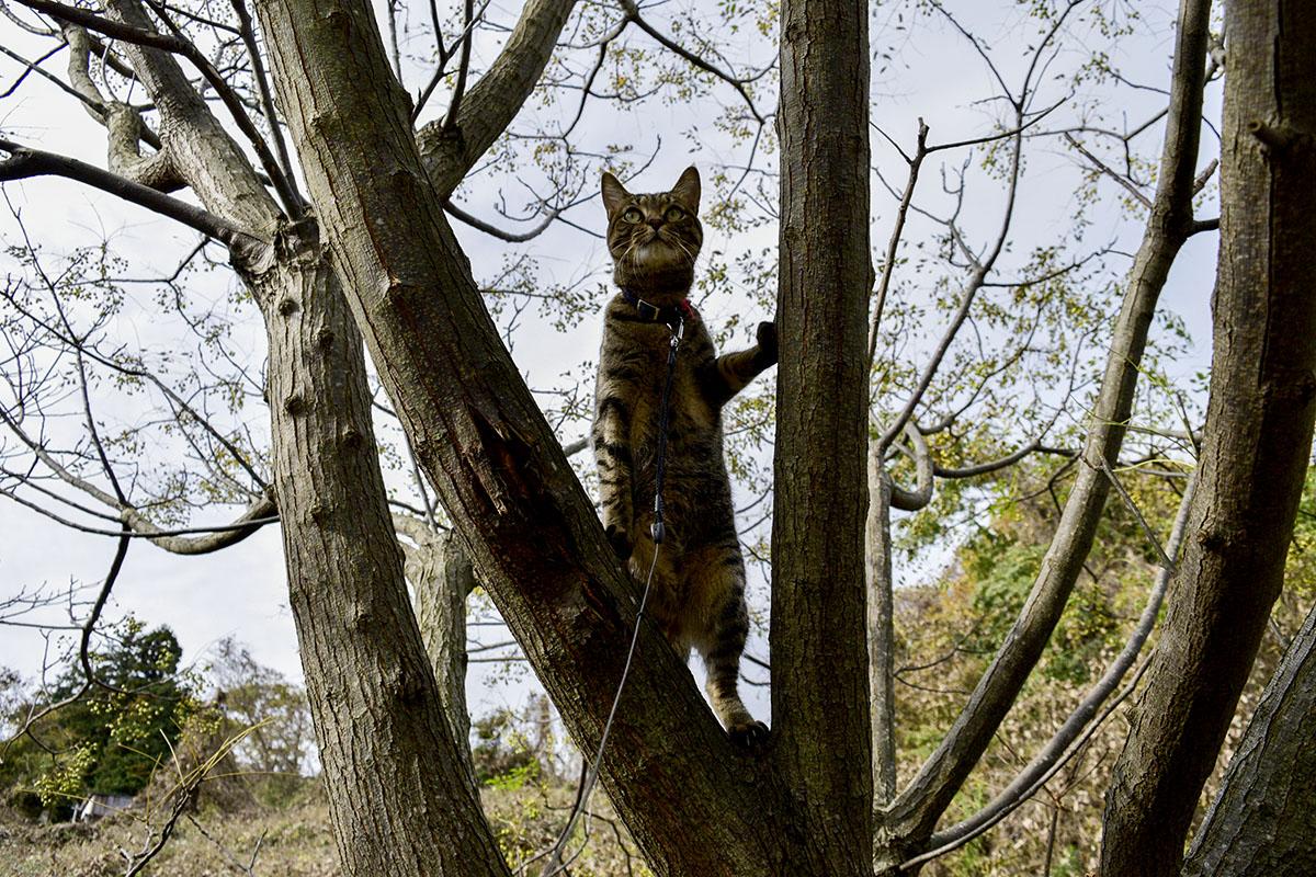 木の上で立ち上がる虎ノ介