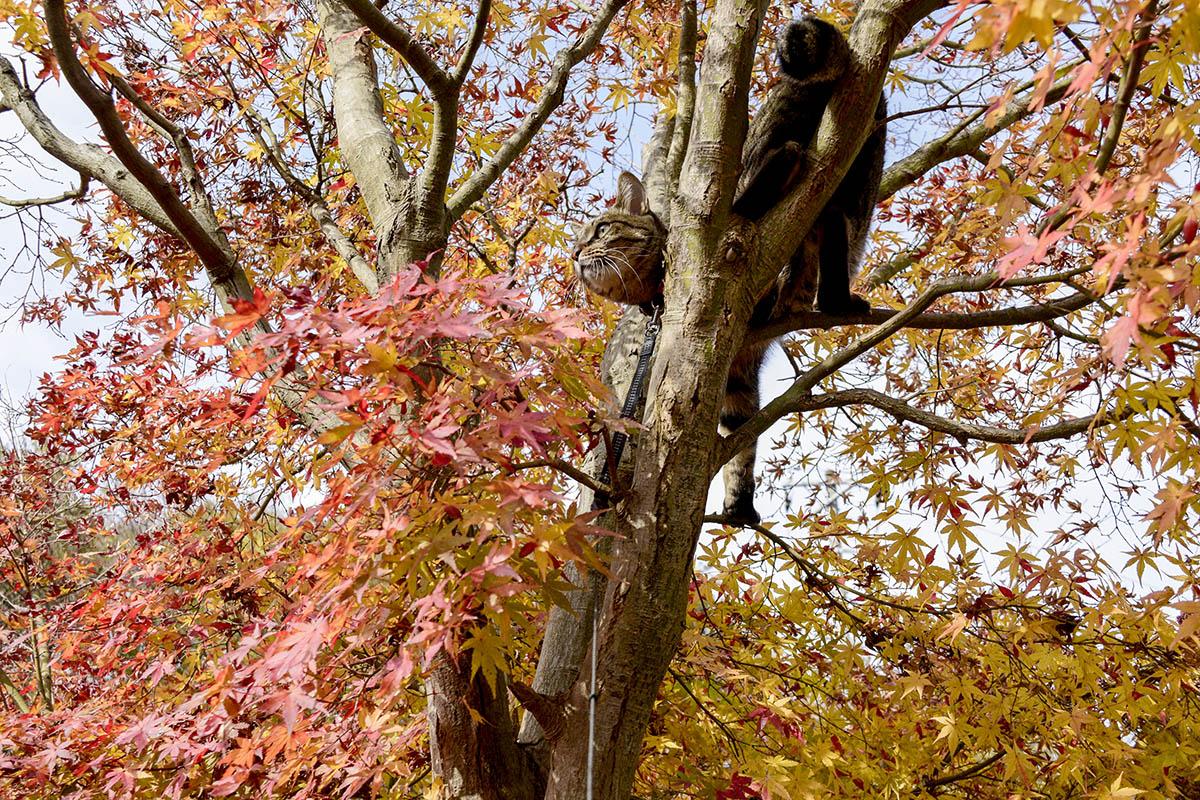 木の上で変な恰好をしているキジトラ猫の虎ノ介