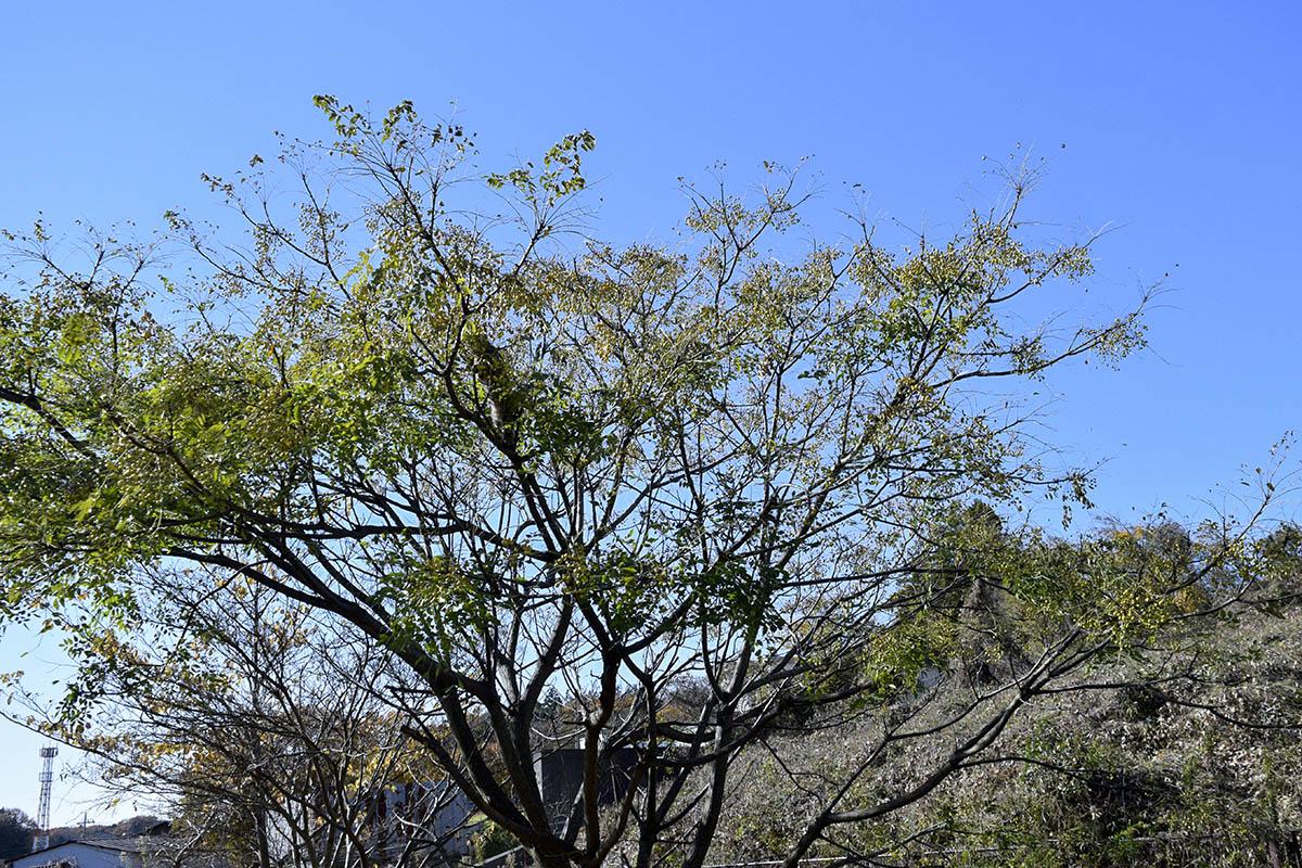 木の上で動けなくなるキジトラ猫の虎ノ介