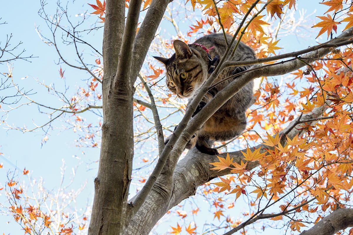 木の上で方向転換する虎ノ介