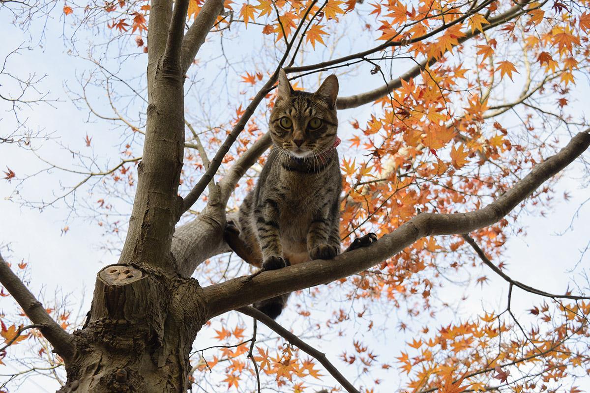 木から降りたがっているキジトラ猫の虎ノ介