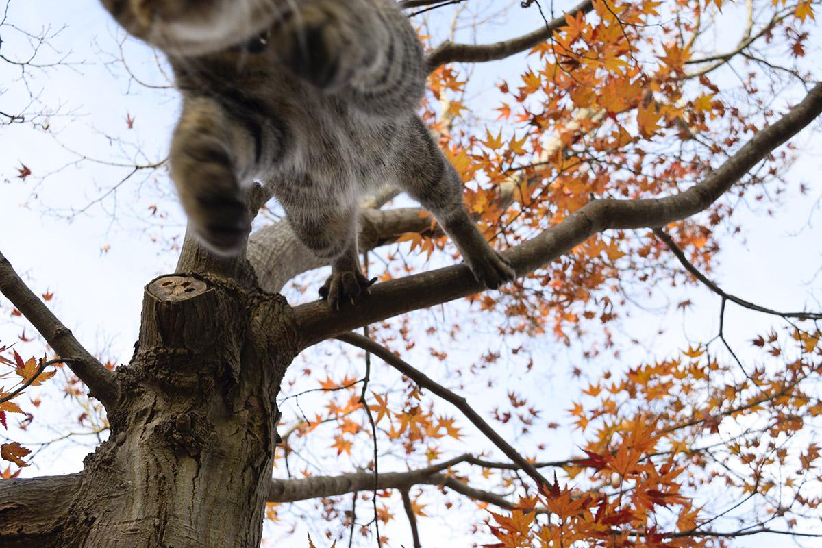 木の枝から人間の肩の上に飛び降りる虎ノ介