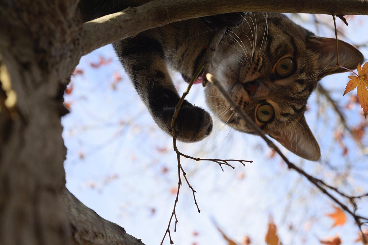 木の上で助けを待つ虎ノ介