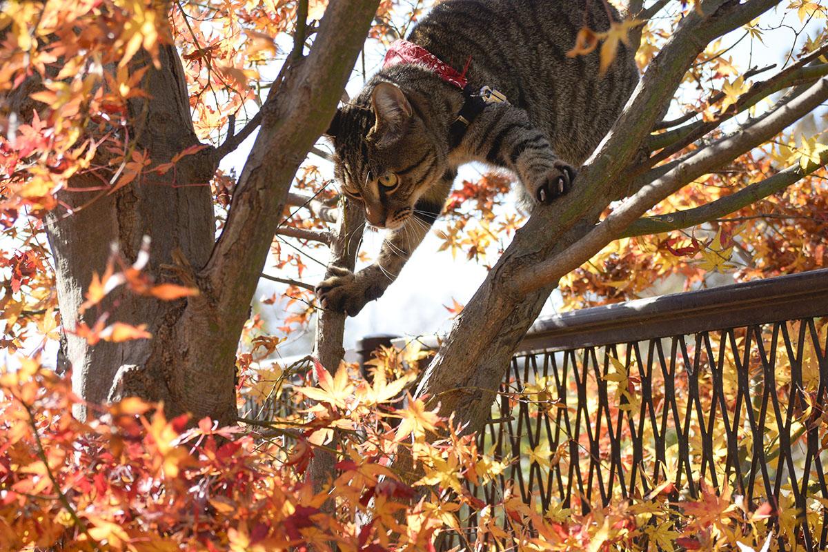 鳥に対抗して木に登る虎ノ介