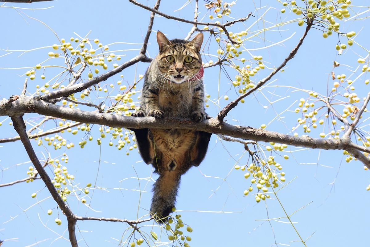 木から降りられくなった虎ノ介