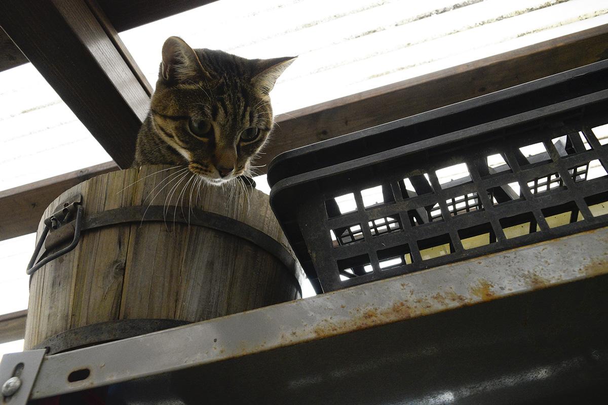 小屋でみつけた鉢に入る虎ノ介